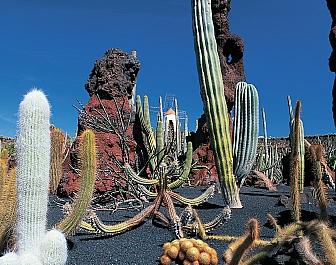Kaktusová zahrada – Guatiza