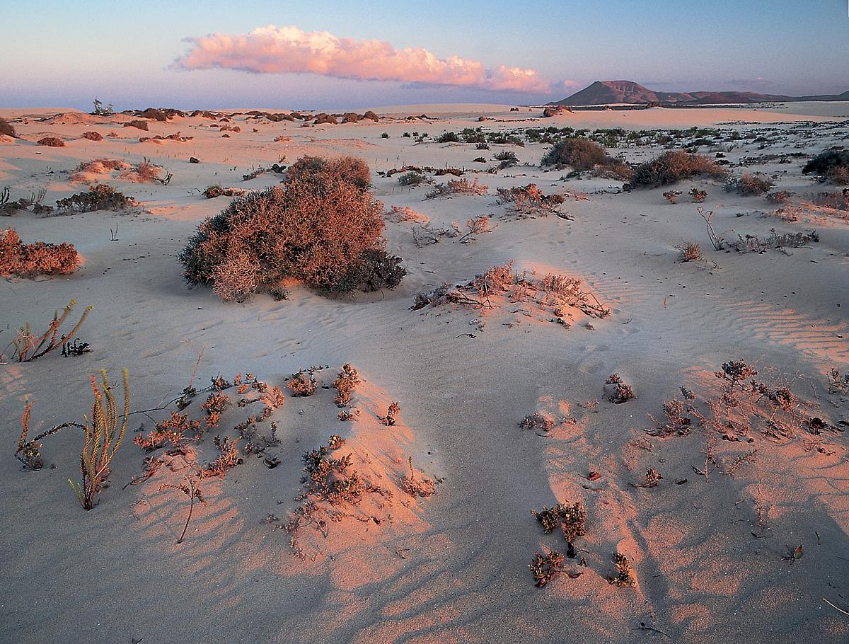 Duny v Corraleju