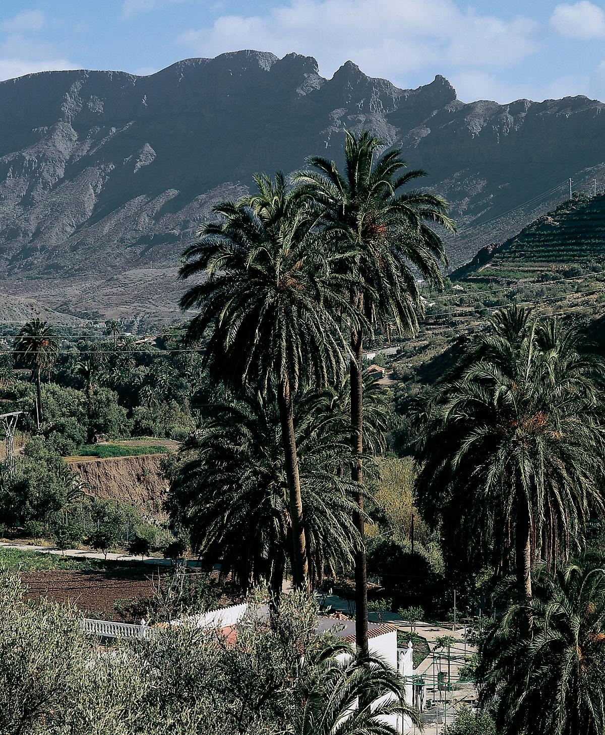 Gran Canaria Valle de Agaete