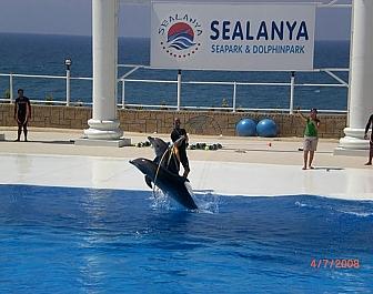 Delfin show