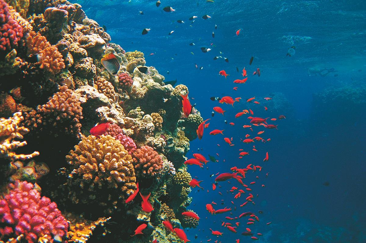 Ostrov Tiran Marsa Alam shutterstock