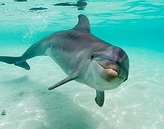 Delfinárium