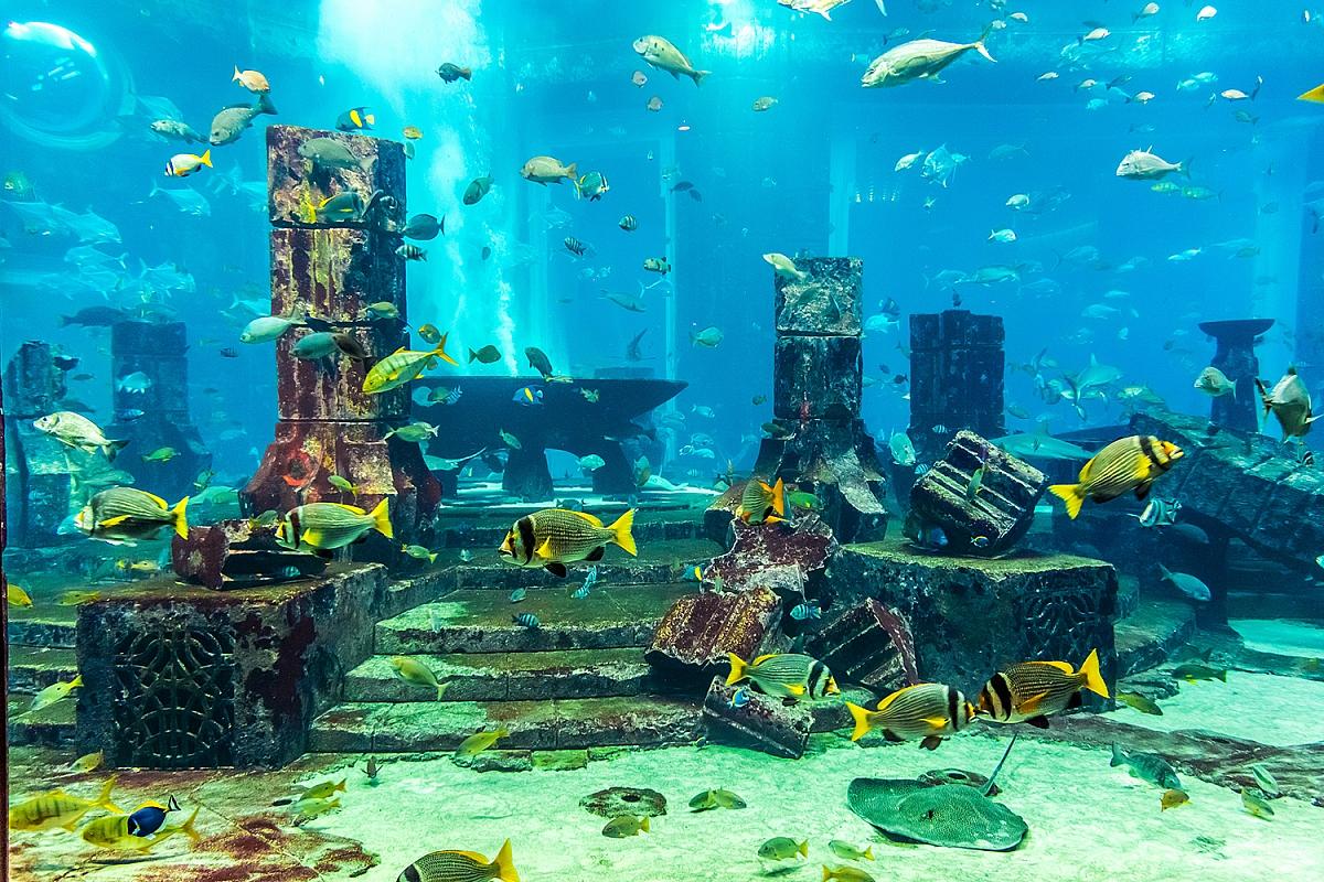 Mořské zahrady