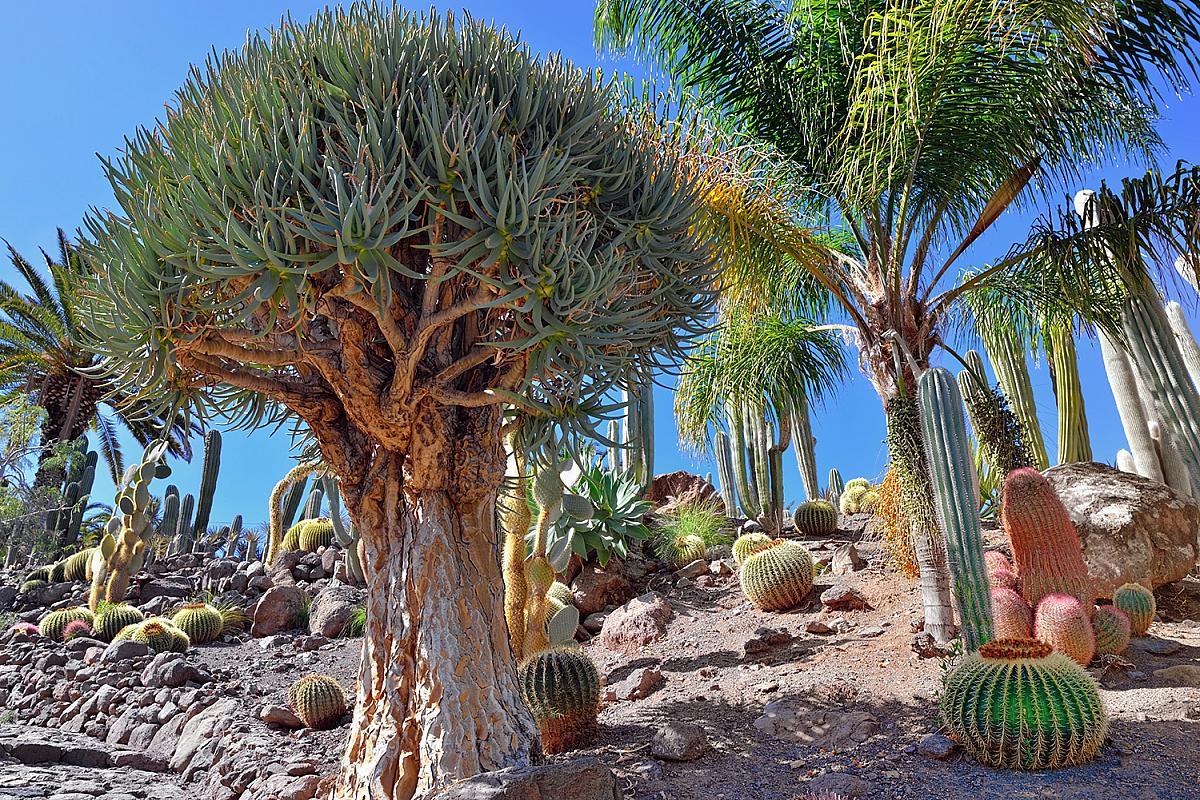 Tropická zahrada Viera y Clavio na Gran Canarii