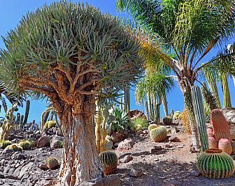 Jardín Botánico Canario Viera y Clavio