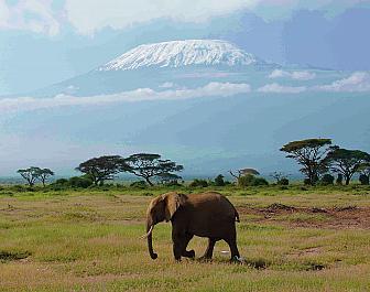 Národní parky Keňa, safari, sloni a Kilimandžáro