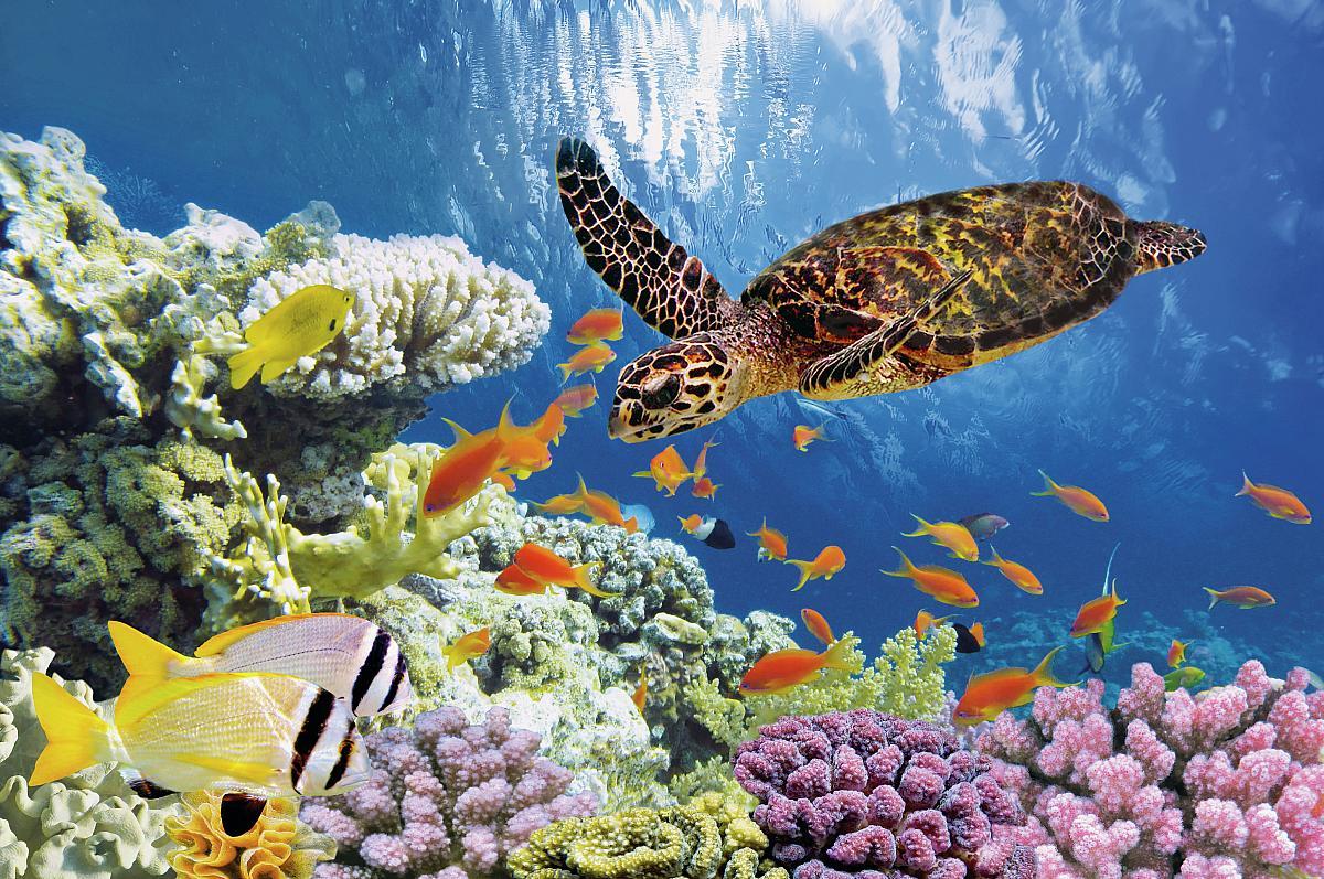 Akvárium Hurghada