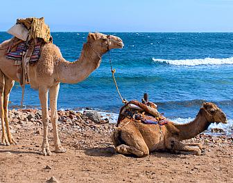 Camel Parque