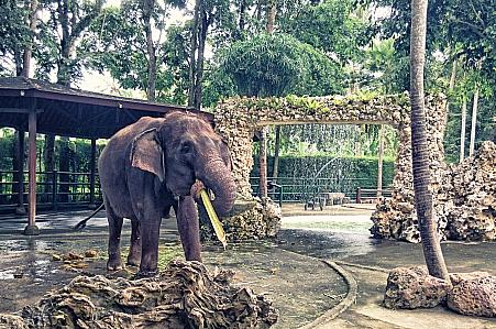 Elephant Safari Park