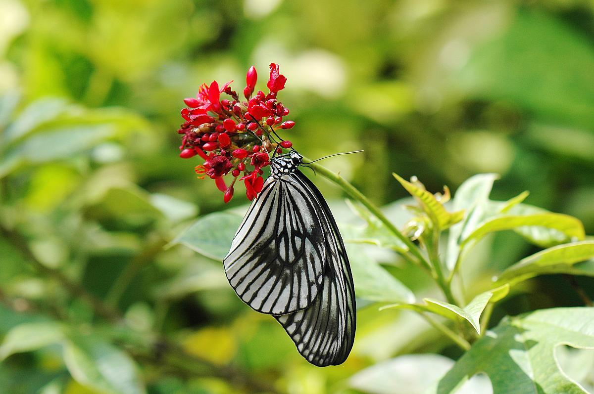 Kemenuh Butterfly Park