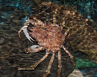 Akvárium Pula