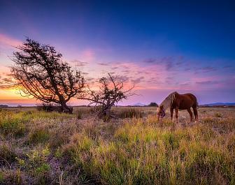 Alykés, kůň u jezera