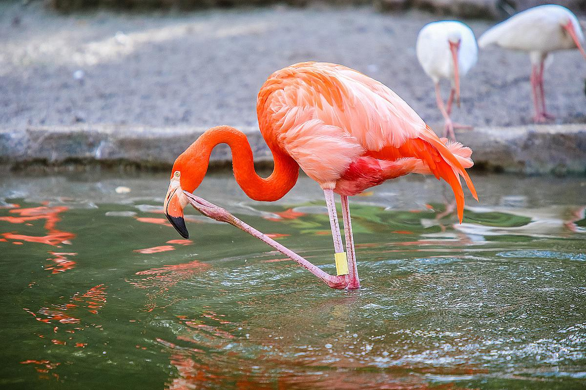 Parco Degli Uccelli