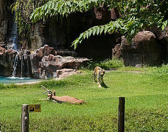 Safari & Marine Park